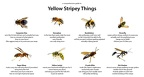 Yellow-Stripey-Things